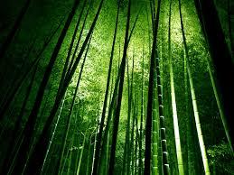 images (2)  bambu